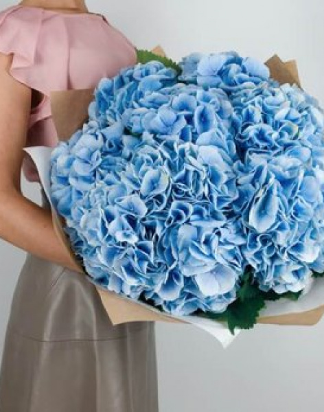 Bouquet of 25 blue hydrangeas: delivery of flowers in