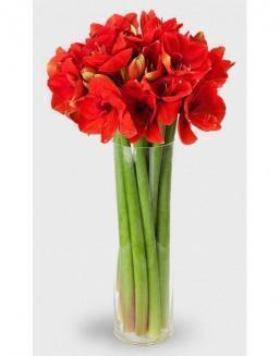Bouquet of 15 red amariliss | Flowers for Holiday