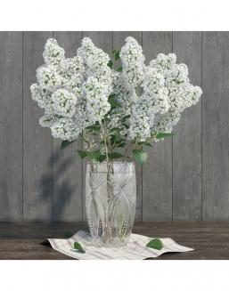 Bouquet of 15t white lilac | Flowers for Holiday