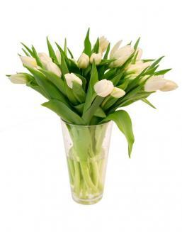 Bouquet of 25 white tulips | Tulips
